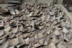 """Confiscated shark fins are seen after a police operation in Manta, Ecuador in this handout picture provided by the Ecuador Interior Ministry on May 28, 2015. Ecuadorean police confiscated 200,000 shark fins destined for Peru during a police operation dubbed """"Operation Shark"""" (Operacon Tiburon) where six people were arrested, according to a police press release. REUTERS/Ecuador Interior Ministry/Xavier Camacho/Handout"""