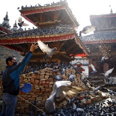 A man feeds pigeons near the debris of a collapsed temple after the earthquake in Kathmandu, May 14th 2015. Credit: Reuters