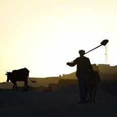 The silhouette of an Afghan farmer is seen as he leads his cows in the old city of Bamiyan on June 17th 2015. Bamiyan stands in a deep green and lush valley stretching 100 kilometres through central Afghanistan, on the former Silk Road that once linked China with Central Asia and beyond. The town was home to two nearly 2,000 year old Buddha statues before they were destroyed by the Taliban in late 2001. Credit: AFP