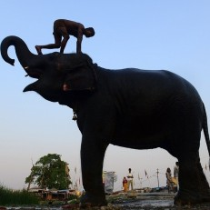 An Indian mahout washes his elephant on a roadside in Allahabad, India on June 9th 2015. Credit: AFP