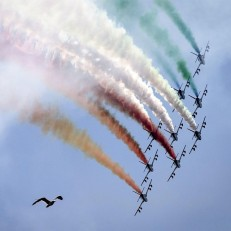 A bird 'photobombs' a performance by Italy's famed military aeronautical team Frecce Tricolori during celebrations marking Republic Day in Rome on June 2nd 2015. Credit: EPA