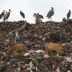 An Indian girl searches for reusable material at a rubbish dump in Gauhati, India. Credit: AP