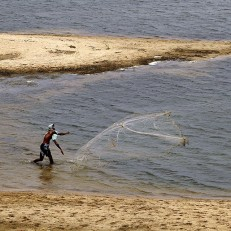An Indian villager throws his net in the Daya River to catch fish on the outskirts of the eastern Indian city of Bhubaneswar, May 29th 2015. Credit: AP