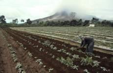 Un hombre trabaja en sus tierras mientras sus cultivos permanecen cubiertos de ceniza del volcán Sinabung (al fondo), en Karo (Indonesia). Miles de personas han sido evacuadas y continúan sin poder regresar a sus casas debido a la actividad del volcán Sinabung. (Dedi Sahputra / EFE)